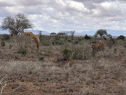 Top safari 🔝