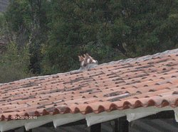 Cats on roof of party area.