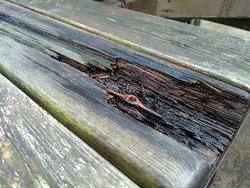 Rotten seats with rusty nails to rip your clothes on!