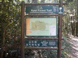 Trail to Big Tree