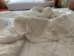 Ripped up comforter with blood stains on it