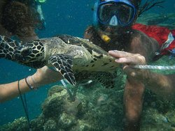 Turtle at Mystery Island.