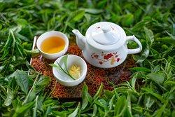 DARA TEA is to bring you the highest quality tea. We recognize that a high quality tea is what maximizes the customer experience.  DARA TEA ชาแม่แสะ ชาป่าร้อยปี ข้าวซอยเจ้ซิง