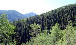 American Lake Trail - Weg hinauf - Ausblick