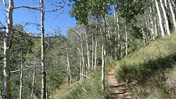 American Lake Trail - Weg hinauf