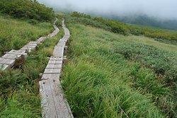 木道を歩く