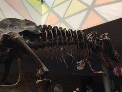 Dino Quest @ Science Centre
