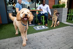 Our hotel is pet friendly and welcome on Stella San Jac's patio!