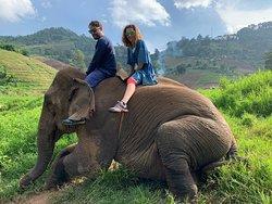 Elephant sanctuary working with elephant