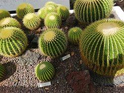 Panoramica sulle piante.