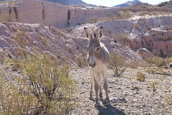 This one greeted us as we were arriving in Oatman
