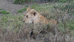 Safari 5 jours