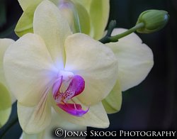 Orchid in Dalat Flower Park