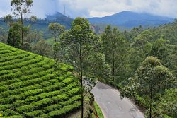 way to tea garden