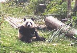 Chengdu Day Trip Experience