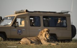 Roy Safaris Ltd