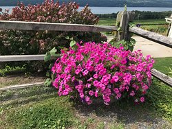 More flowers in the parking area overlooking the lake.