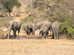View during lunch - elephants at the watering hole