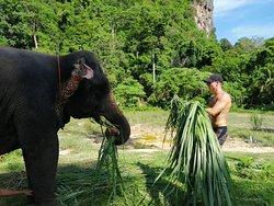 Aonang Elephant Sanctuary