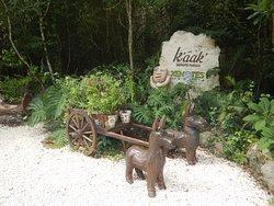 Xenotes Oasis Maya by Xcaret
