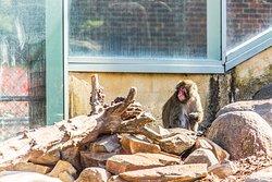 Monkeys a free exhibit in the park