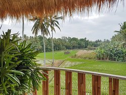 Ricefield View