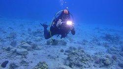 Главное при погружениях - не забудьте камеру! Море может быть таким же дружелюбным, как клуб Снуба!