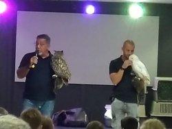 Show águias