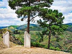 Adega Quinta do Pessegueiro - D.O.C Douro