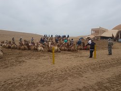 Camel Ride at the Sand Lake