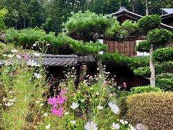 Zenagi's neighbor.