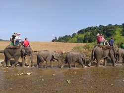 Straight to the Elephant Camp after Sun rise for quite fun and adventure trip.