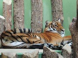 Зоопарк Праги.