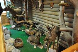 Bolu, Gölcük gölündeki  ( yaşayan hayvanlar ) müze  .