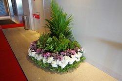 Lobby island of plant