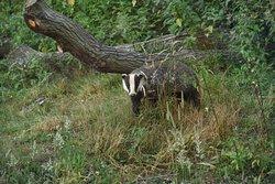 Essex Wildlife Trust Fingringhoe Wick Visitor Centre