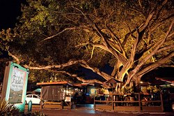 Our 120 Year Old Banyan Tree over our Outdoor Patio
