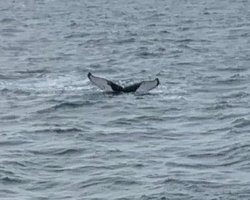 Whale watching out of Barnstable on Cape Cod