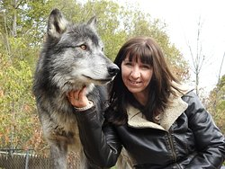 Fall is the best time for pictures with the wolves.  They have beautiful coats!