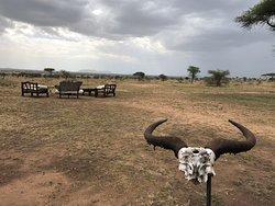 10 day East Africa safari