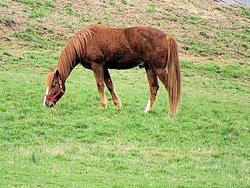 say hello to the horses