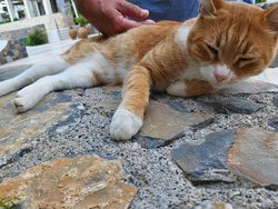 Aristos.......the top boss cat ! :)