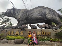 Hello, explores! are you ready for your next adventure? We are Balisee Tour Organizer team, we will guide you to explore Bali and East Java like locals do.  Have been operating for five years in tourism industry, equipped with local knowledge, we will provide you professional, friendly and warm service. What set us apart from the other services is that we offer authentic Bali and East Java experience. Let's Explore around Bali With Us.