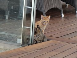 Cats will be seen around the outside dining area