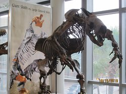 Part of the campus' natural history exhibit on campus.