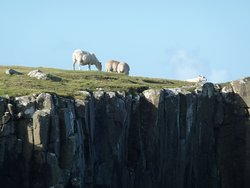 Cliffs and sheep