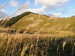 夕陽で輝く金色の高原