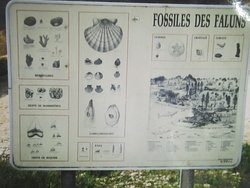 Carrière-Falunière -Musée de Channay-sur-Lathan. Vue 22. Panneau en Entier des Fossiles des Faluns.