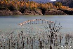 橋と立ち枯れた樹木