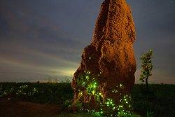 光るアリ塚(エマス国立公園) 毎日光るアリ塚を見ることができました。